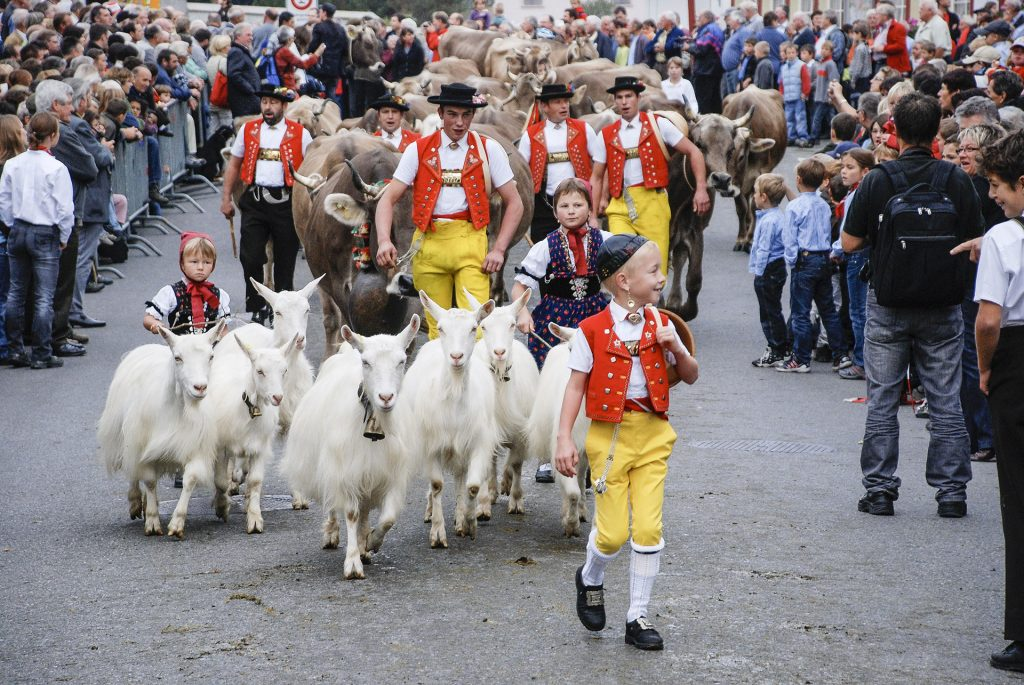 cattle market - switzerland - goats - parade